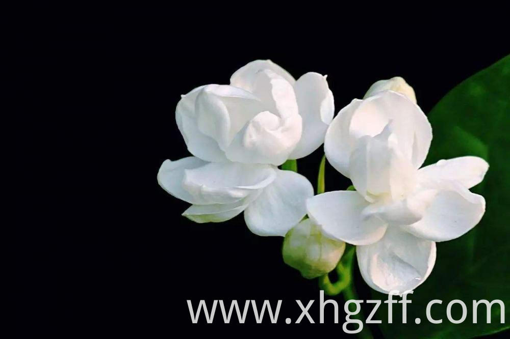 Natural Jasmine Essential Oil