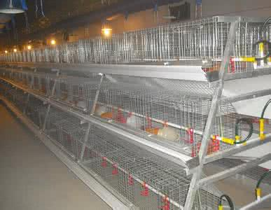 A Type Automatic Hen Equipment