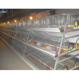 A Type Automatic Broiler Farming Equipment