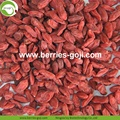 Factory Supply Healthy Nutrition Natural Lycium Chinensis