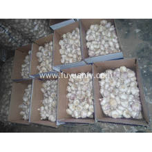 Factory Cheap price for 6.0Cm Normal White Garlic Top Quality of Fresh Normal White Garlic supply to Benin Exporter