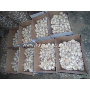 Top Quality of Fresh Normal White Garlic