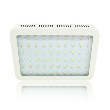 Hydroponics 600W 1000W 1200W LED Grow Light for Indoor Plants