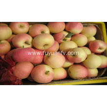 chinese fresh gala apple
