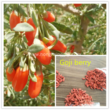From Ningxia Goji berry samll grains and cheaper