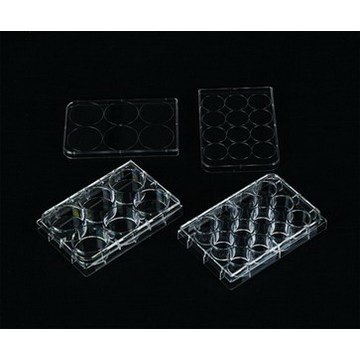 Tissue Culture Plate