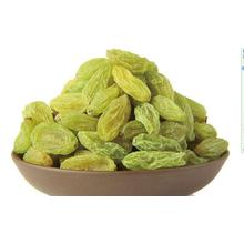 Dried xinjiang green raisins for export
