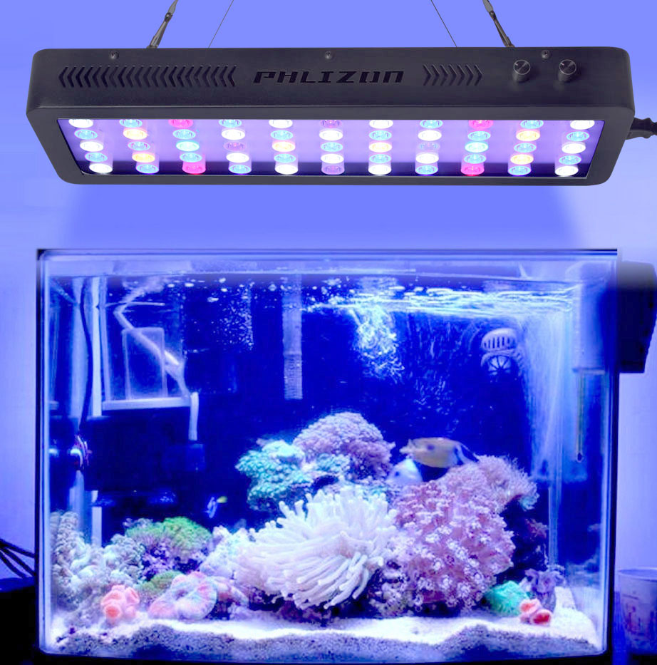 Led Aquarium Algae