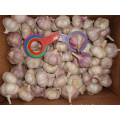 Different Sizes Normal White Garlic New Crop 2019