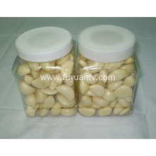 Big size peeled garlic