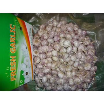 Hot Sale Fresh Normal White Garlic