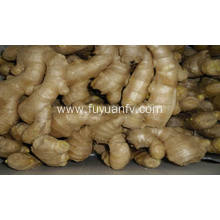 Air dried fat ginger