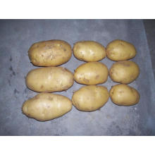 Export Standard Yellow Fresh Potato