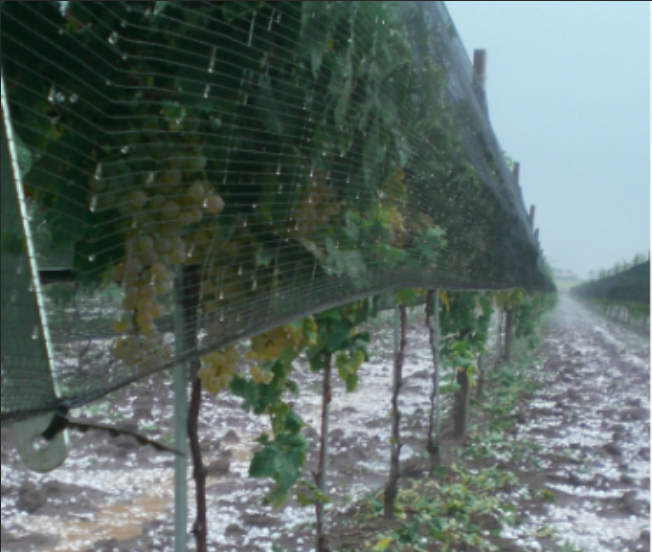 Agriculture Farming Plants Anti Hail Net