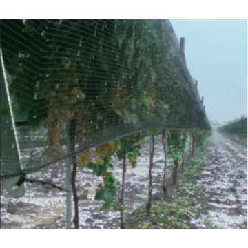 Anti Hail Netting For Agriculture Farming Plants