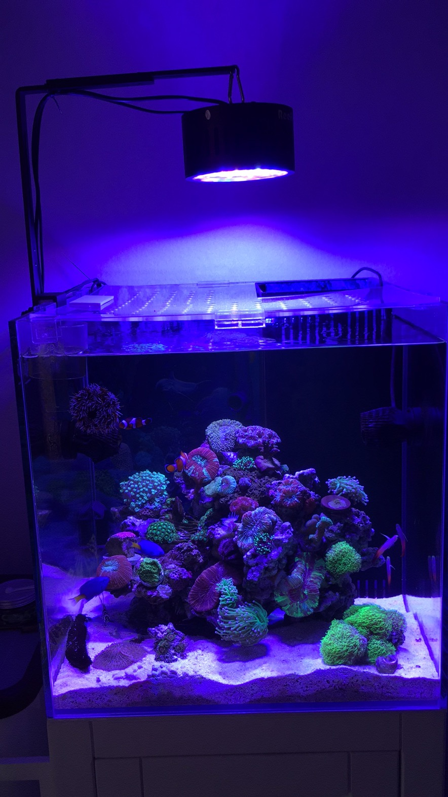 Phlizon Aquarium Light