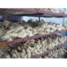Economic crop air dried ginger