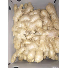 Air dried Ginger prices steadily increasing