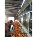 Fresh Shandong best quality Carrot