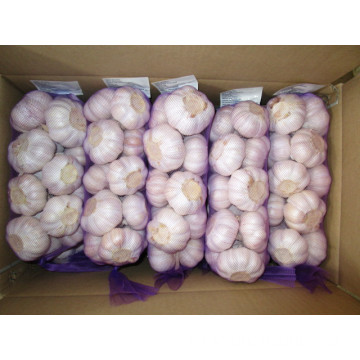Common Garlic Regular Hybrid Normal White Garlic 5.5cm