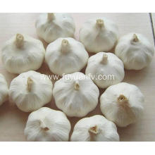 ODM for White Whole Garlic Spicy pure white garlic export to American Samoa Exporter