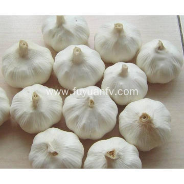 Spicy pure white garlic
