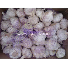 China for Natural Fresh White Garlic Normal white garlic big size export to Australia Exporter