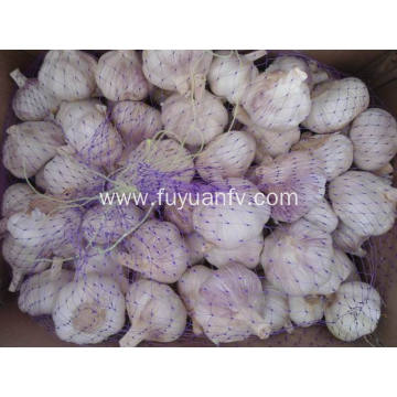 Normal white garlic big size