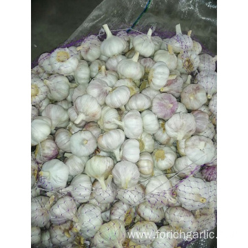 2019 Hot Sale Normal White Garlic