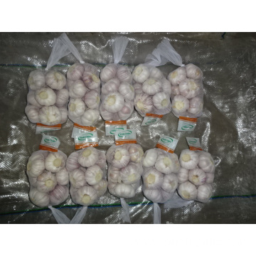 New Season Fresh Normal Garlic