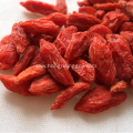 Best Medical  herb Lycium of Goji berry