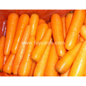 Delicious fresh carrots 2019