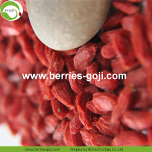 Factory Wholesale Fruit Sweet Low Pesticide Goji Berry
