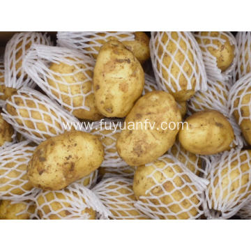 Yellow fresh potato with good quality