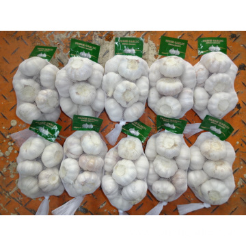 Jinxiang Normal White Garlic With Competitive Price