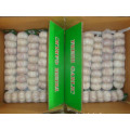 Normal White Garlic packed in 8pcs bag