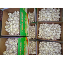 Normal White Garlic High Quality Crop 2019