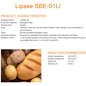 Concentrated Lipase for baking enzymes