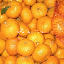 fresh baby mandarin orange factory direct export