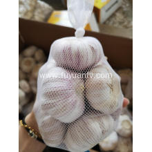 NORMAL white garlic jinxiang