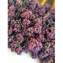 Fresh red delocious grape