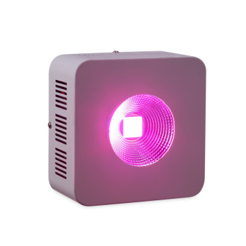COB Grow Light LED wäicht Liicht fir Indoor Plants