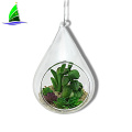 Hanging Clear Glass Succulent Flowerpot Container