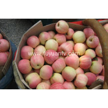 Market price for Gala apple for sales