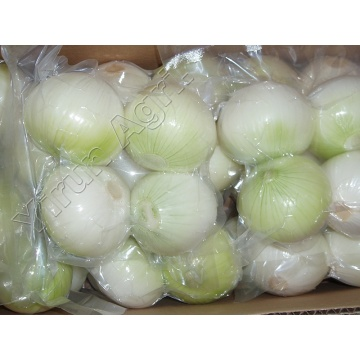Good Quality Peeled Onions Wholesale With Best Price