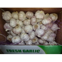 Normal White Garlic Jinxiang Fresh 2019