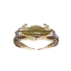 Swimming Crab Whole Sale