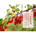 Chuanqi four seasons series goji berries green
