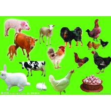 Poultry feed additives Betaine Hcl 95%