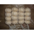 Cold Storage Pure White Garlic